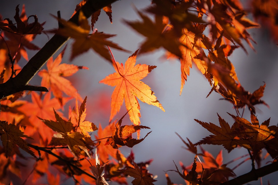 Happy First Day of Fall! Get Our Autumn Marketing Ideas